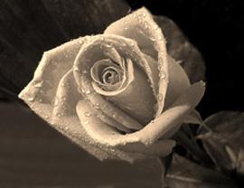 rosa-g.jpg