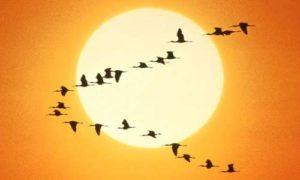 Módulo IX - Revolução Solar @ AstroBrasil